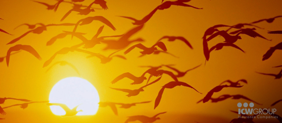 Birds flying past the sun at sunset