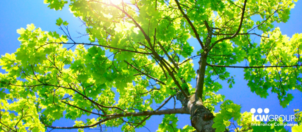 A close up of green leaves on a tree
