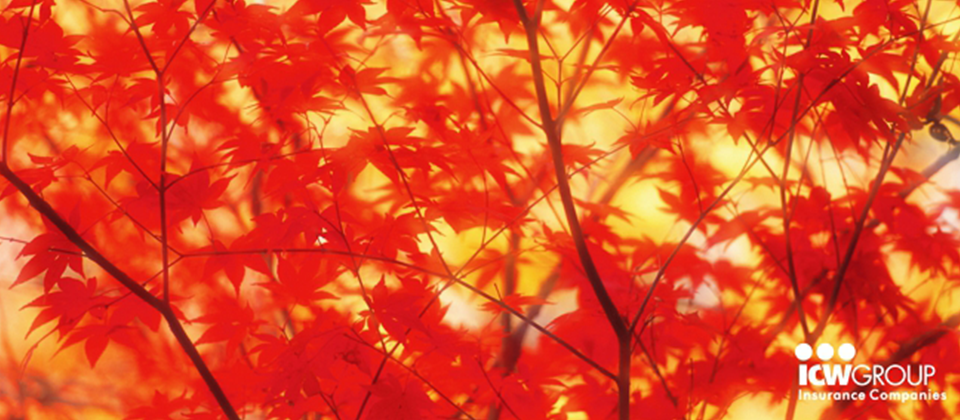 A close up of red leaves